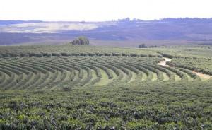Regioes produtoras de cafe
