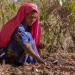 Etiópia: O berço do café
