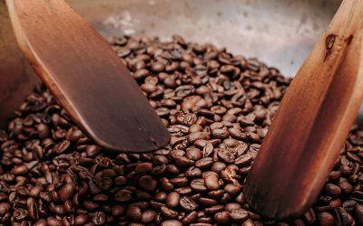 Catuaí, o café que revela herança do mundo indígena